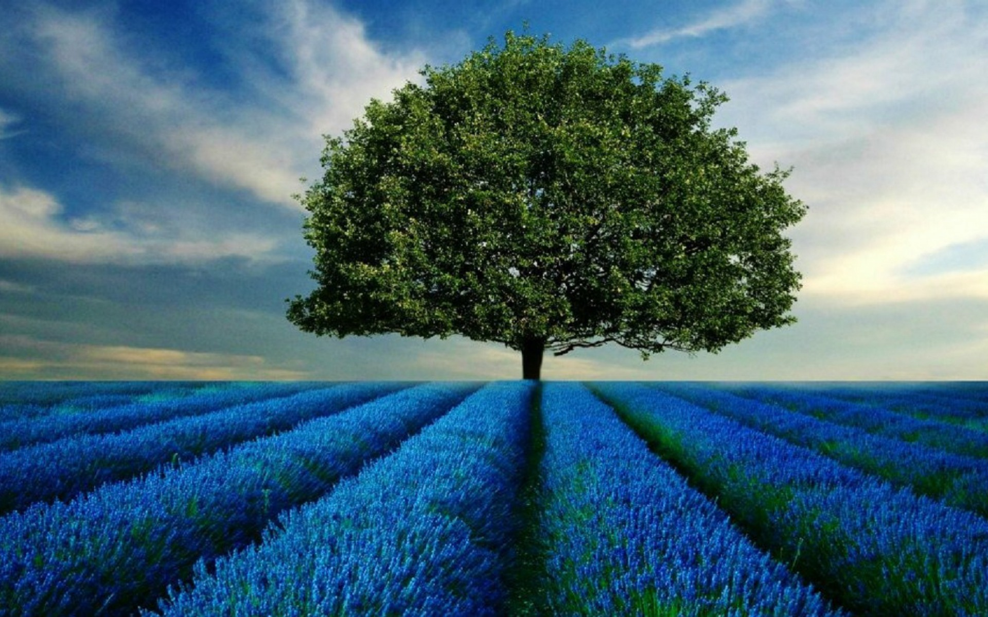 tree--blue-fields-wallpapers_37770_1920x1200